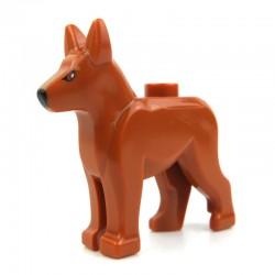 Dark Orange Dog Alsatian, German Shepherd with Black Eyes